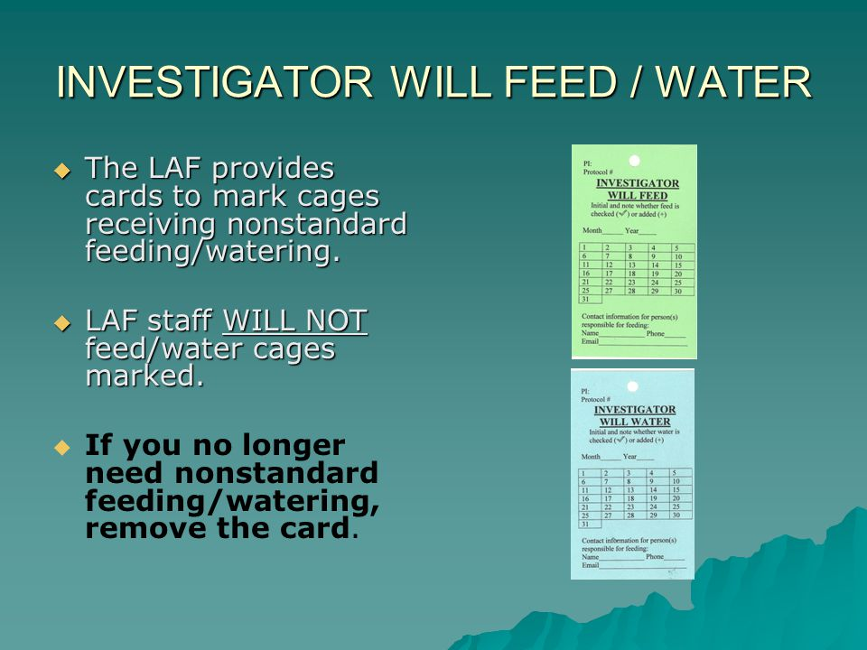 INVESTIGATOR WILL FEED / WATER The LAF provides cards to mark cages receiving nonstandard feeding/watering. The LAF provides cards to mark cages recei