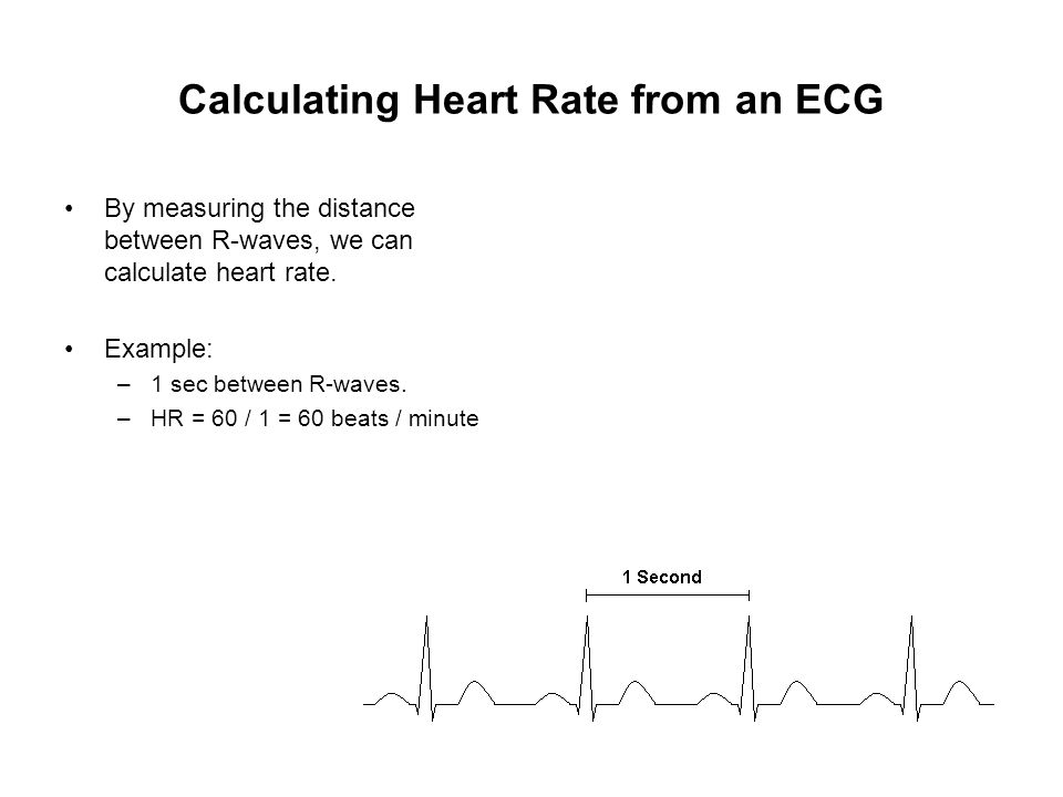 Calculating Heart Rate from an ECG By measuring the distance between R-waves, we can calculate heart rate. Example: –1 sec between R-waves. –HR = 60 /