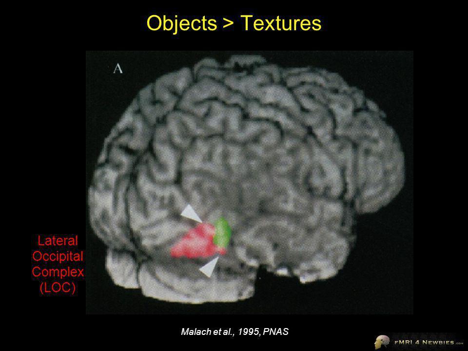 Objects > Textures Malach et al., 1995, PNAS Lateral Occipital Complex (LOC)