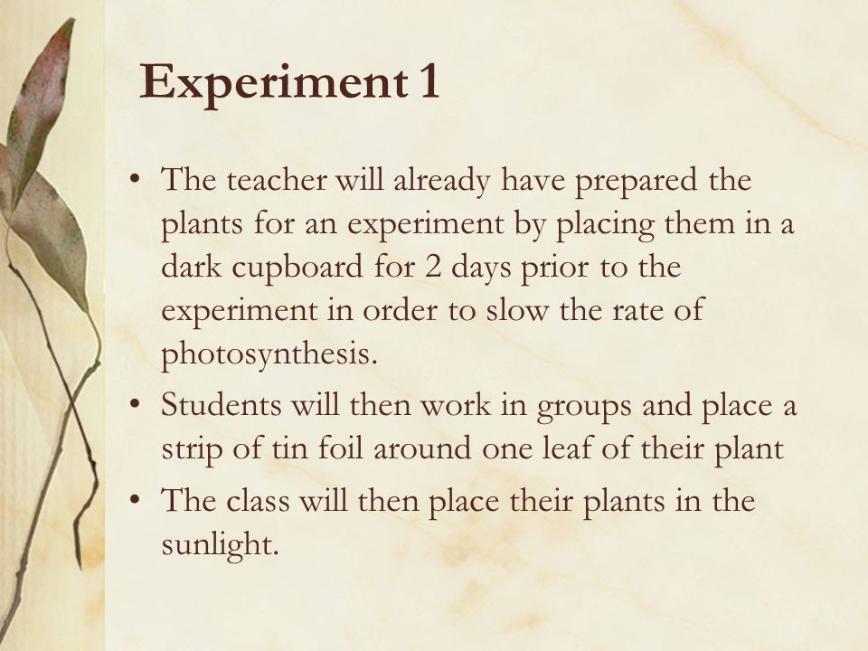 Experiment 1 The teacher will already have prepared the plants for an experiment by placing them in a dark cupboard for 2 days prior to the experiment in order to slow the rate of photosynthesis.