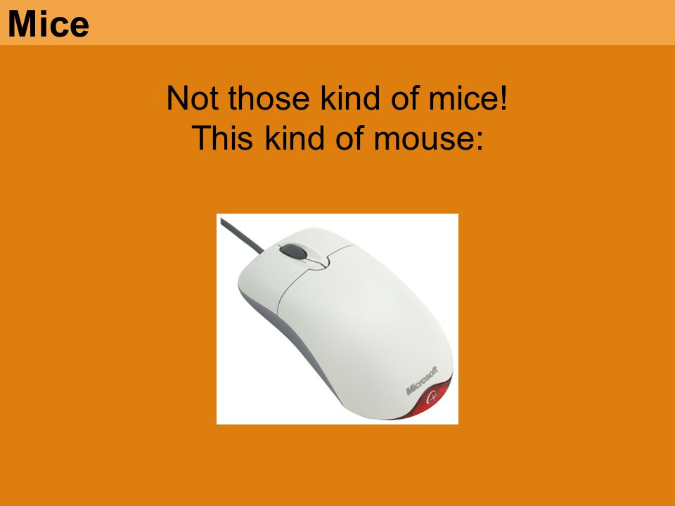 Not those kind of mice! This kind of mouse: Mice