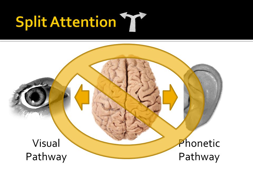 Phonetic Pathway Visual Pathway
