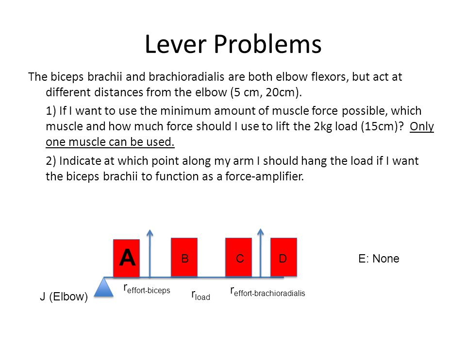 Lever Problems The biceps brachii and brachioradialis are both elbow flexors, but act at different distances from the elbow (5 cm, 20cm).