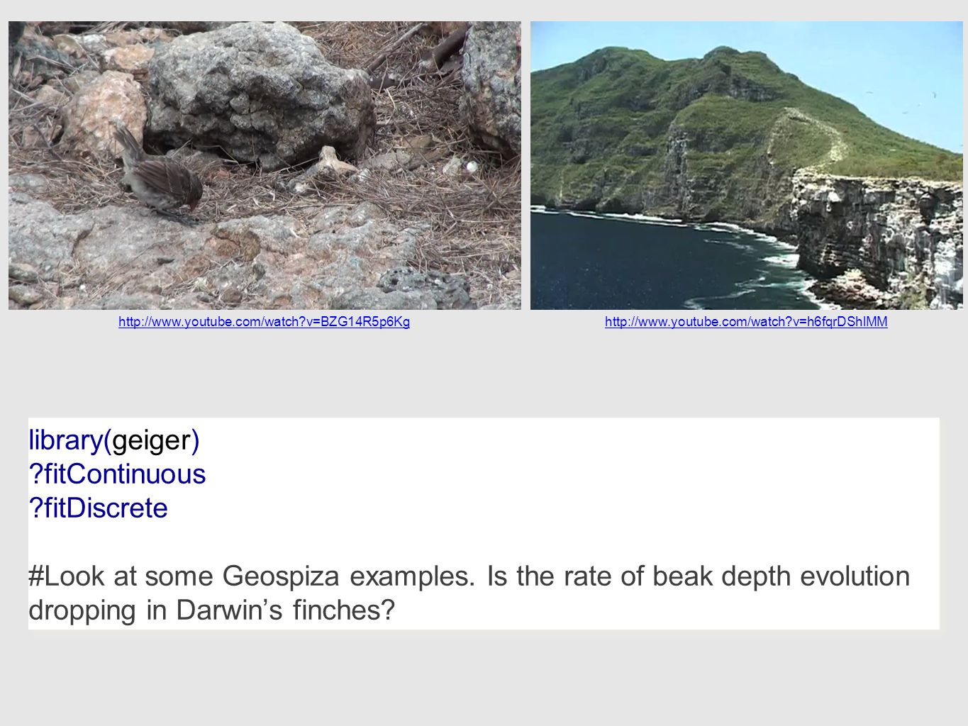library(geiger) ?fitContinuous ?fitDiscrete #Look at some Geospiza examples.