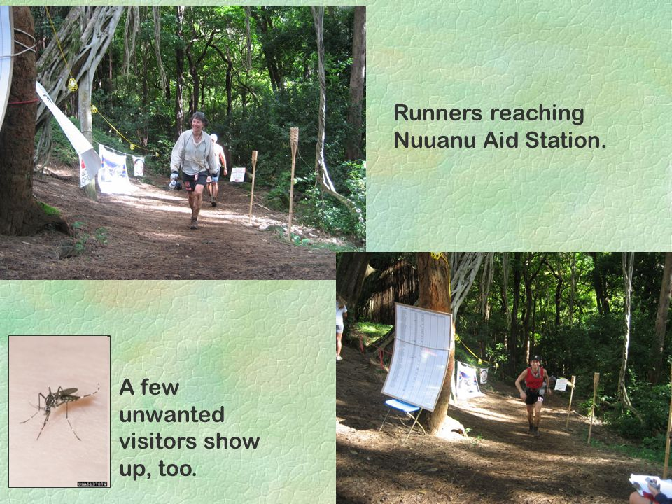 Runners reaching Nuuanu Aid Station. A few unwanted visitors show up, too.