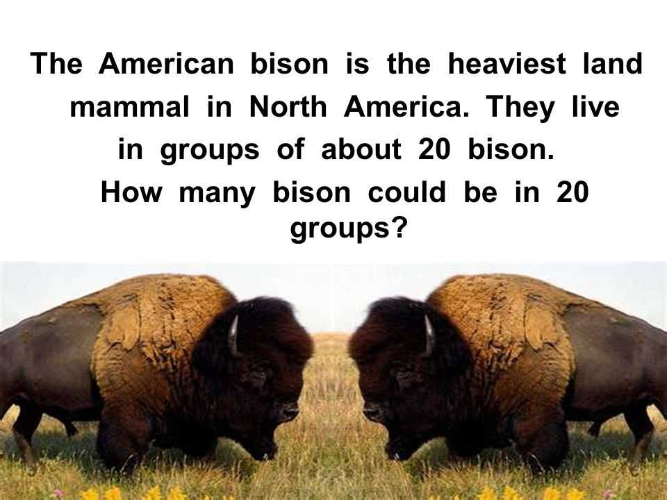 The American bison is the heaviest land mammal in North America. They live in groups of about 20 bison. How many bison could be in 20 groups?