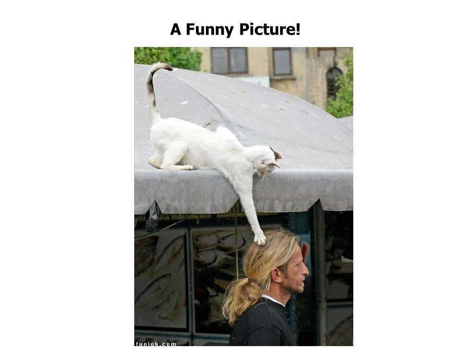 A Funny Picture!