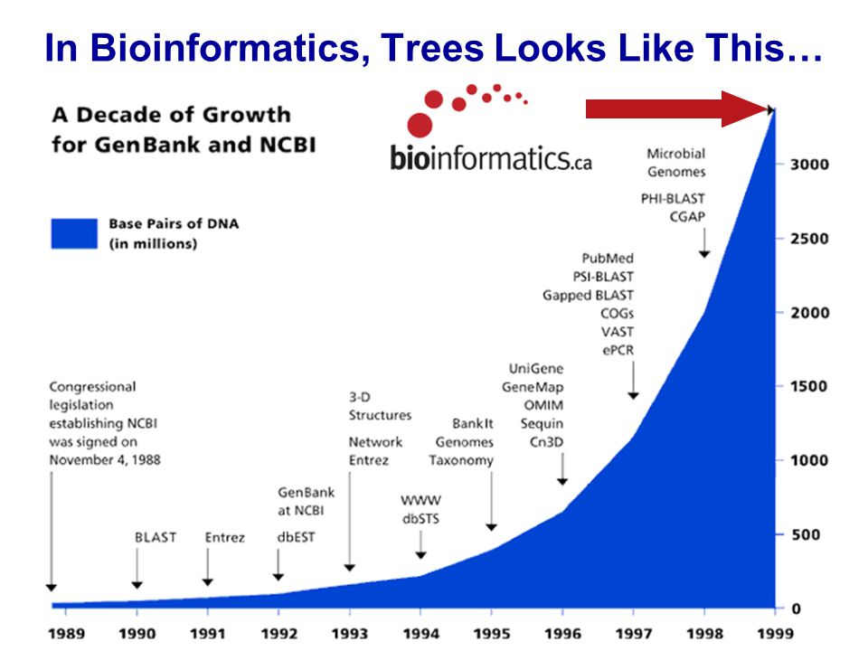 In Bioinformatics, Trees Looks Like This…