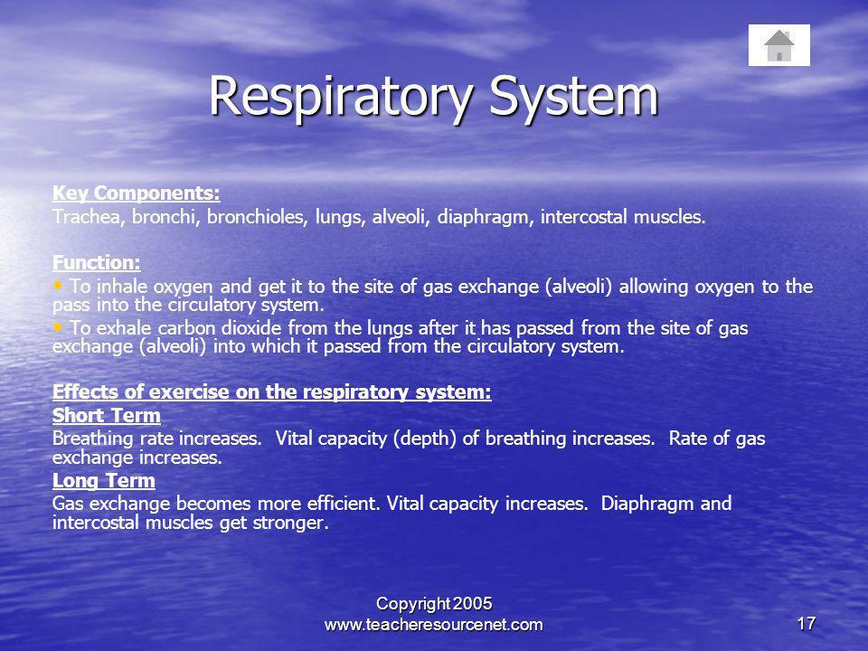 Copyright 2005 www.teacheresourcenet.com17 Respiratory System Key Components: Trachea, bronchi, bronchioles, lungs, alveoli, diaphragm, intercostal mu