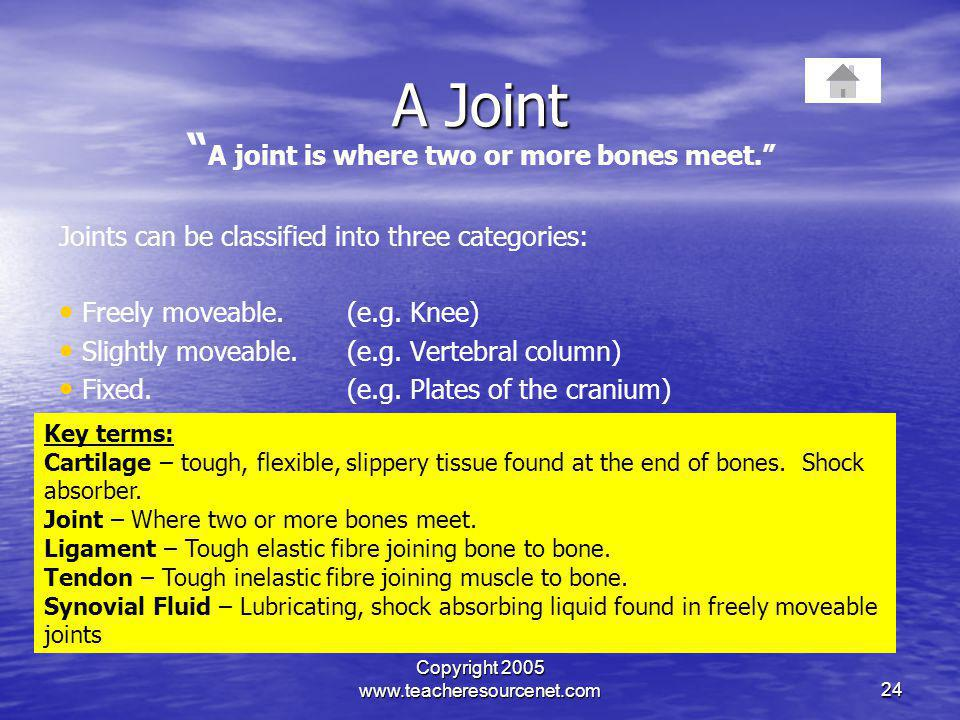 Copyright 2005 www.teacheresourcenet.com24 A Joint A joint is where two or more bones meet. Joints can be classified into three categories: Freely mov