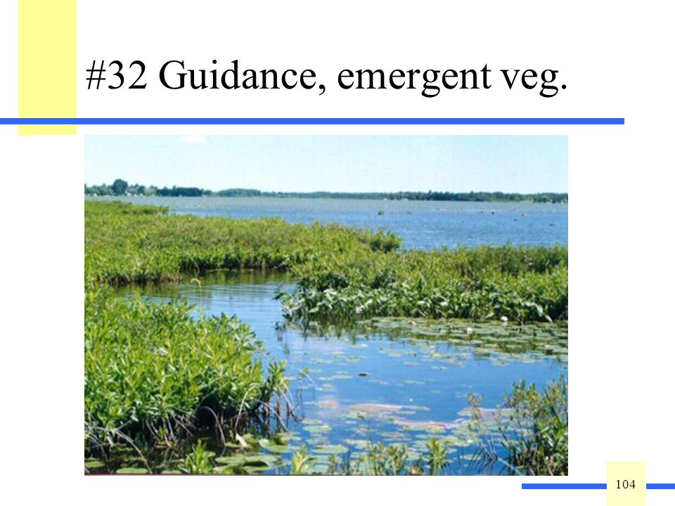104 #32 Guidance, emergent veg. The erosive strength of waves and currents can be greatly dissipated by a dense, emergent vegetation cover. In additio