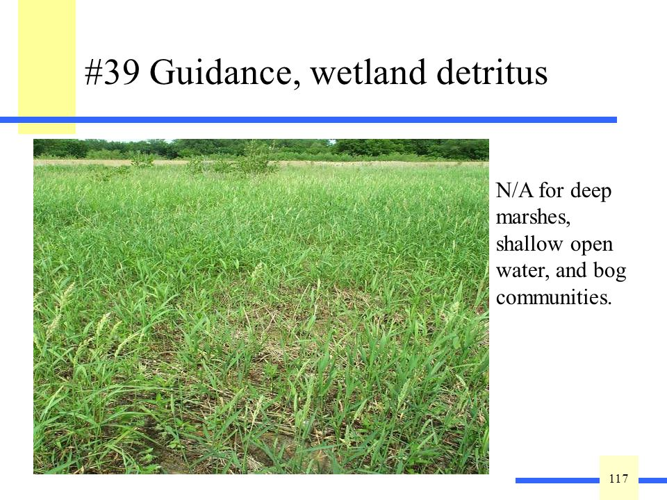 117 #39 Guidance, wetland detritus Detritus or vegetative litter in various stages of decomposition is a sign of a healthy wetland.