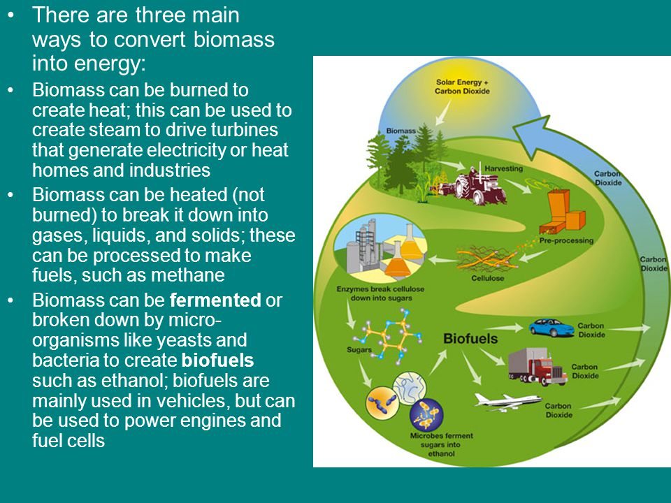 There are three main ways to convert biomass into energy: Biomass can be burned to create heat; this can be used to create steam to drive turbines tha