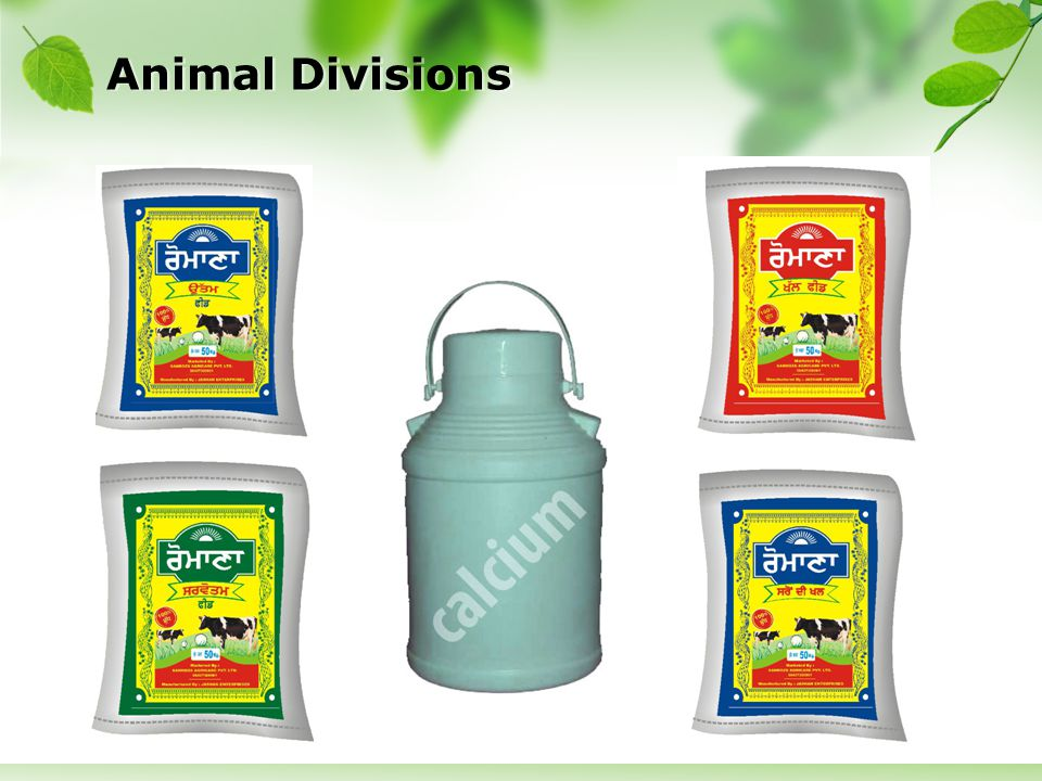 Animal Divisions