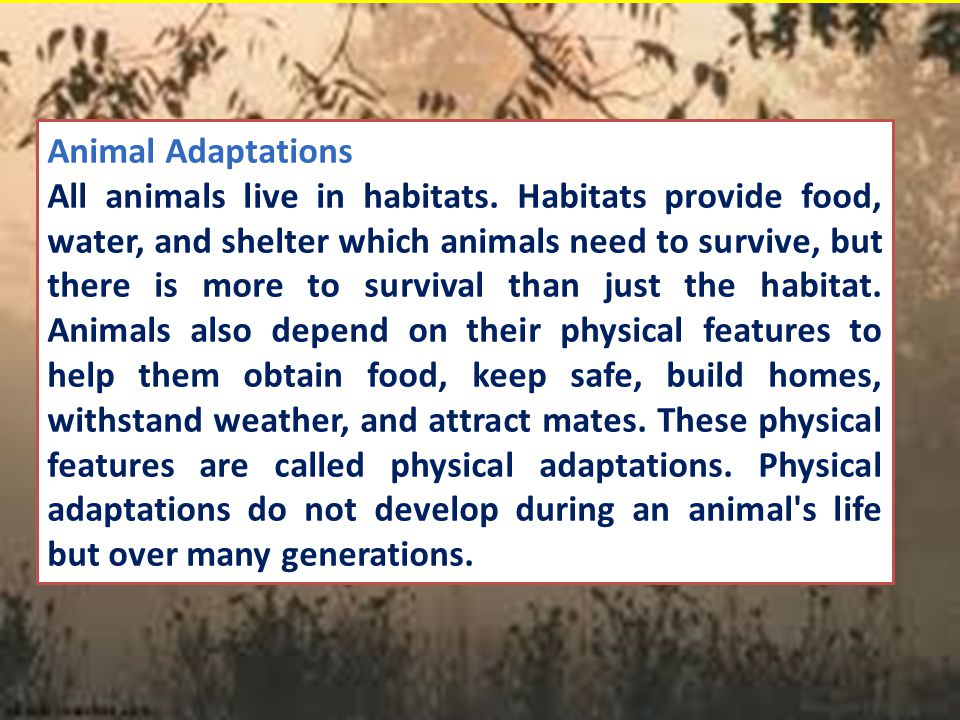Animal Adaptations All animals live in habitats. Habitats provide food, water, and shelter which animals need to survive, but there is more to surviva