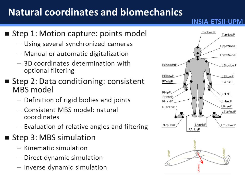 INSIA-ETSII-UPM 38/46 Natural coordinates and biomechanics Step 1: Motion capture: points model Using several synchronized cameras Manual or automatic