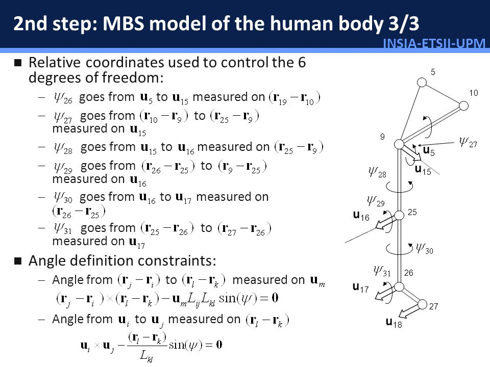 INSIA-ETSII-UPM 41/46 2nd step: MBS model of the human body 3/3 Relative coordinates used to control the 6 degrees of freedom: goes from to measured o