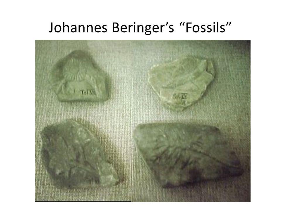 Johannes Beringers Fossils
