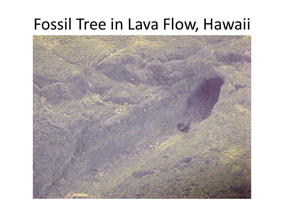 Fossil Tree in Lava Flow, Hawaii