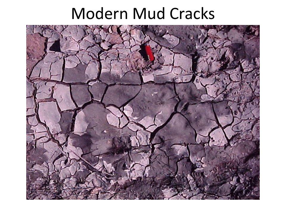 Modern Mud Cracks