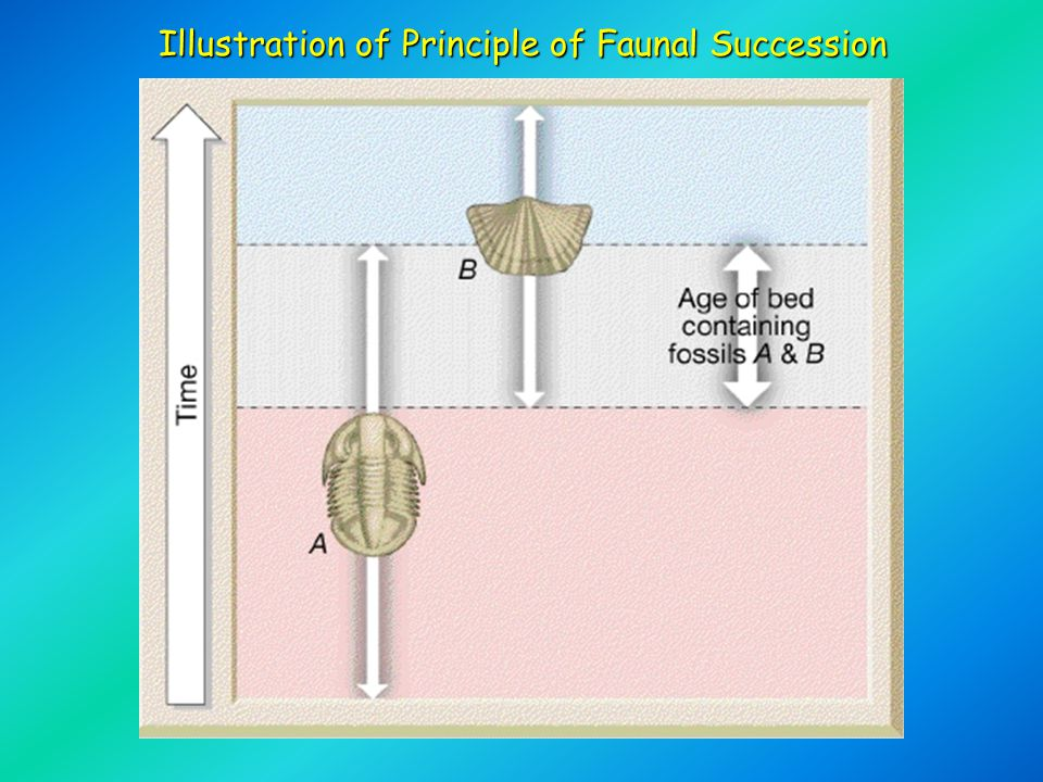 Illustration of Principle of Faunal Succession
