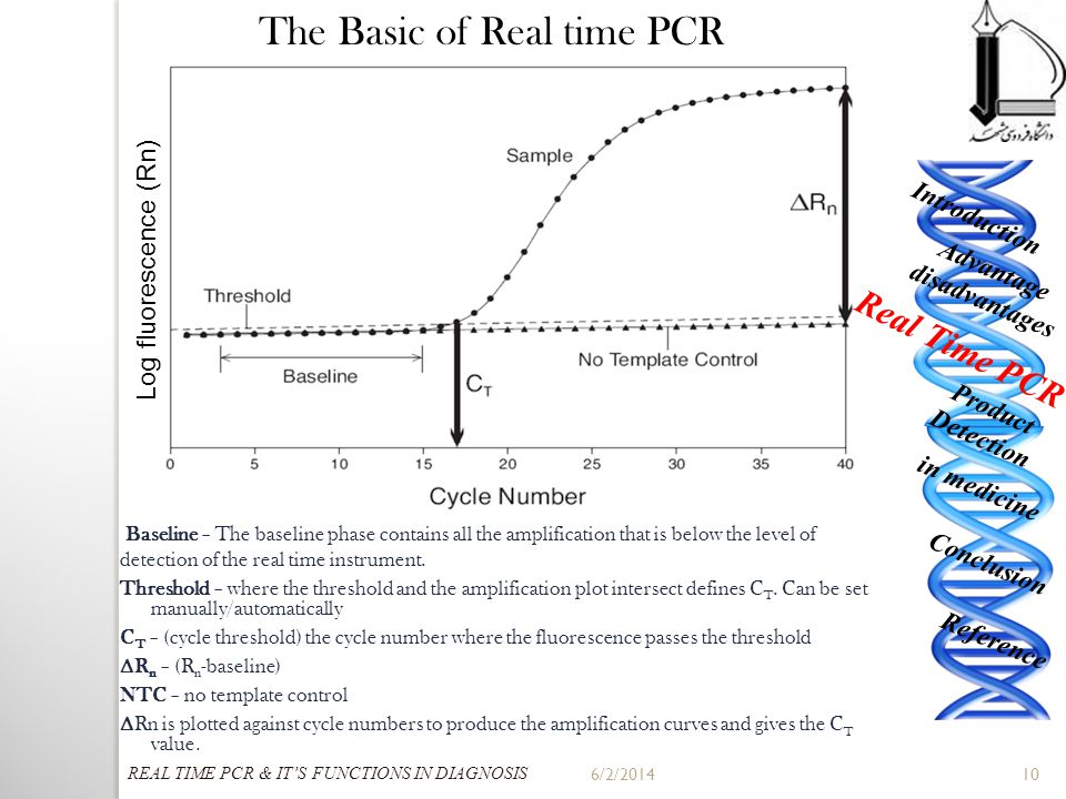 6/2/2014 10 The Basic of Real time PCR Baseline – The baseline phase contains all the amplification that is below the level of detection of the real t