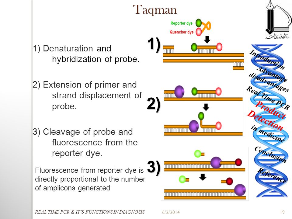 6/2/201419 1) 2) 3) 1) Denaturation and hybridization of probe. 2) Extension of primer and strand displacement of probe. 3) Cleavage of probe and fluo
