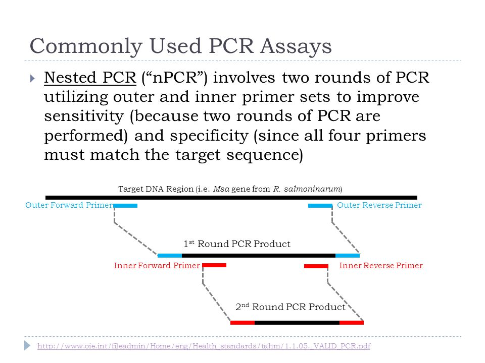 Commonly Used PCR Assays Nested PCR (nPCR) involves two rounds of PCR utilizing outer and inner primer sets to improve sensitivity (because two rounds of PCR are performed) and specificity (since all four primers must match the target sequence) Inner Forward PrimerInner Reverse Primer 1 st Round PCR Product Outer Forward PrimerOuter Reverse Primer 2 nd Round PCR Product Target DNA Region (i.e.