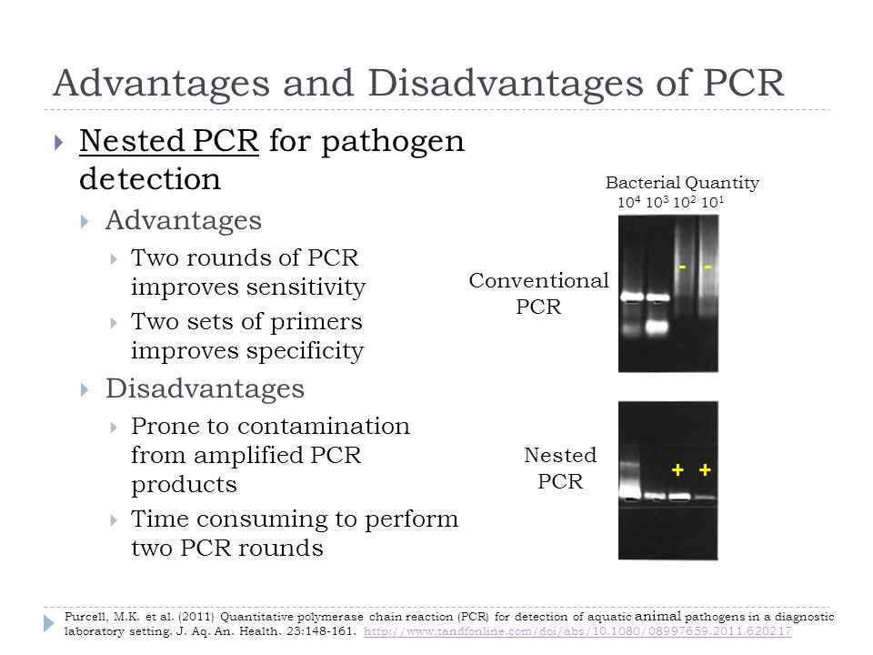 Advantages and Disadvantages of PCR Nested PCR for pathogen detection Advantages Two rounds of PCR improves sensitivity Two sets of primers improves specificity Disadvantages Prone to contamination from amplified PCR products Time consuming to perform two PCR rounds ++ -- Bacterial Quantity Nested PCR 10 4 10 3 10 2 10 1 Conventional PCR Purcell, M.K.