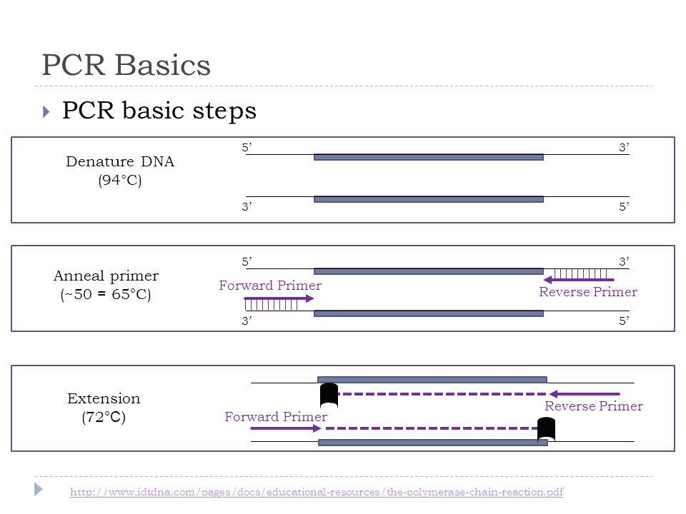 PCR Basics PCR basic steps Denature DNA (94°C) Extension (72 °C) T Forward Primer Reverse Primer 53 35 Anneal primer (~50 = 65 ° C) 53 35 Forward Primer Reverse Primer http://www.idtdna.com/pages/docs/educational-resources/the-polymerase-chain-reaction.pdf