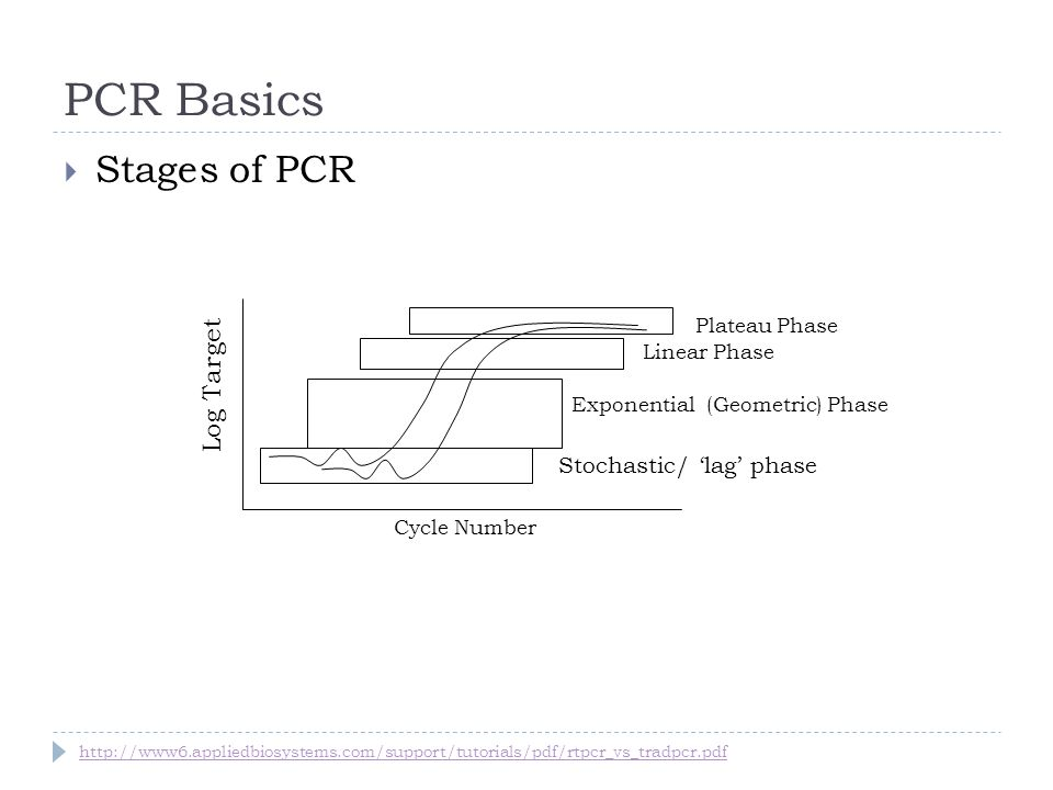 PCR Basics Stages of PCR Cycle Number Exponential (Geometric) Phase Plateau Phase Stochastic/ lag phase Log Target Linear Phase http://www6.appliedbio