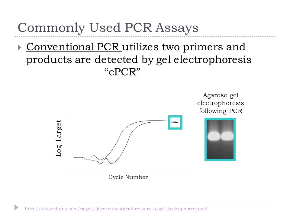 Commonly Used PCR Assays Log Target Agarose gel electrophoresis following PCR Cycle Number Conventional PCR utilizes two primers and products are detected by gel electrophoresis cPCR http://www.idtdna.com/pages/docs/educational-resources/gel-electrophoresis.pdf