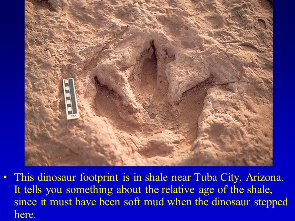 This dinosaur footprint is in shale near Tuba City, Arizona. It tells you something about the relative age of the shale, since it must have been soft