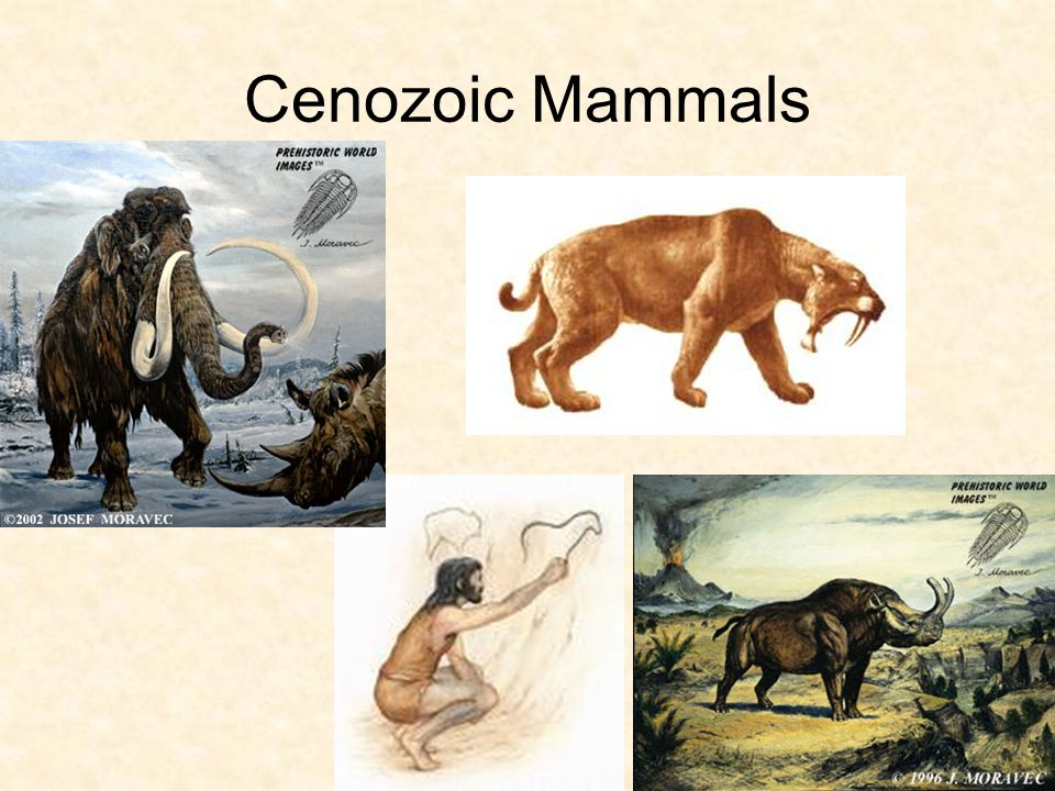 Cenozoic Era Marine animal examples: –Algae, Mollusks, Fish and Mammals Land animal examples: –Bats, Cats, Dogs, Cattle and Humans –Humans are thought to have appeared around 3.5 million years ago (during the most recent period – Quaternary).