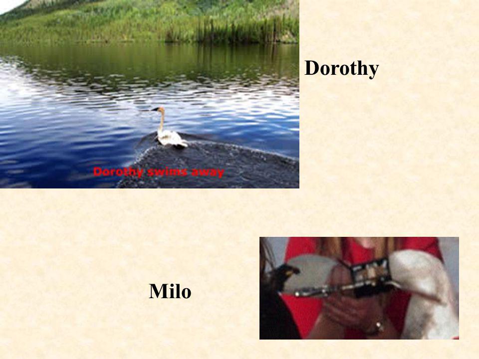 18 Milo Dorothy