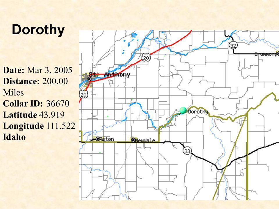 19 Dorothy Date: Mar 3, 2005 Distance: 200.00 Miles Collar ID: 36670 Latitude 43.919 Longitude 111.522 Idaho
