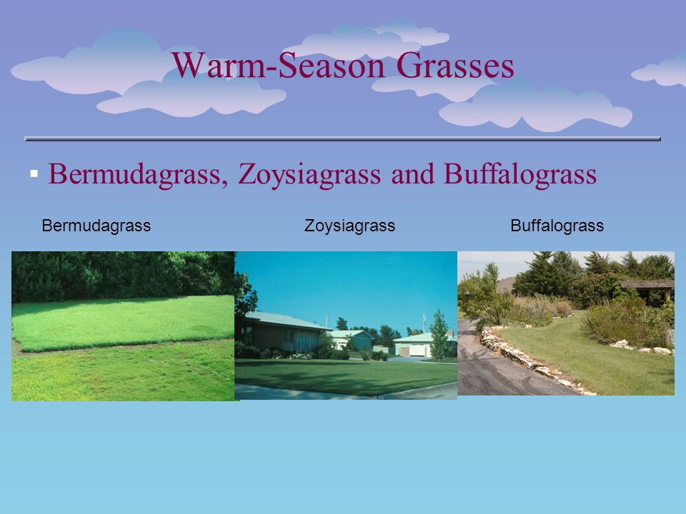 Warm-Season Grasses Bermudagrass, Zoysiagrass and Buffalograss BermudagrassZoysiagrassBuffalograss