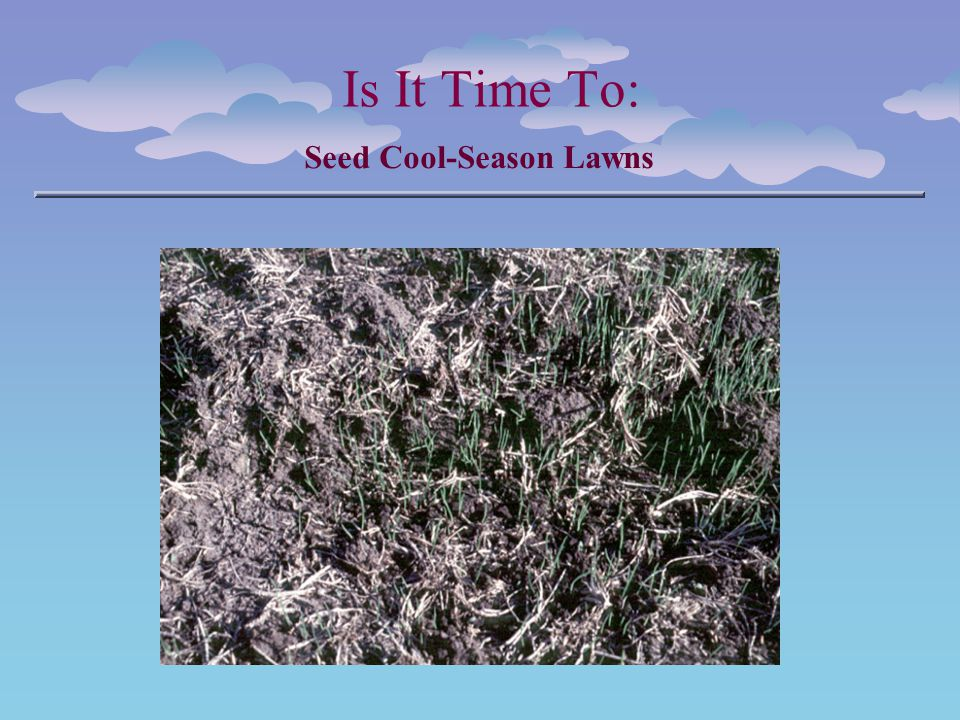 Is It Time To: Seed Cool-Season Lawns