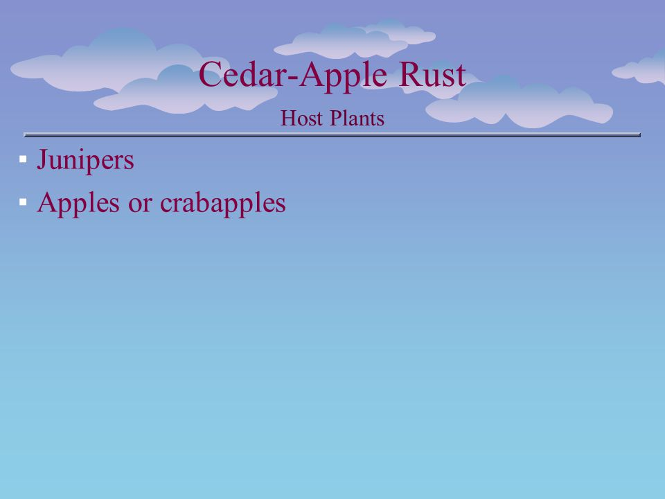 Cedar-Apple Rust Host Plants Junipers Apples or crabapples