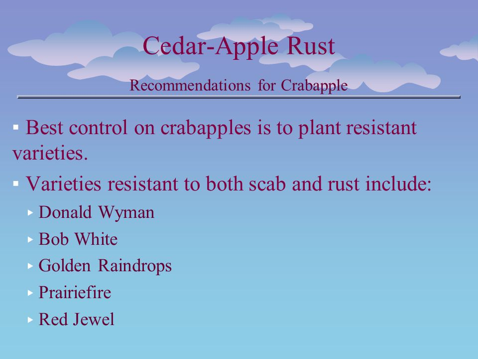 Cedar-Apple Rust Recommendations for Crabapple Best control on crabapples is to plant resistant varieties. Varieties resistant to both scab and rust i