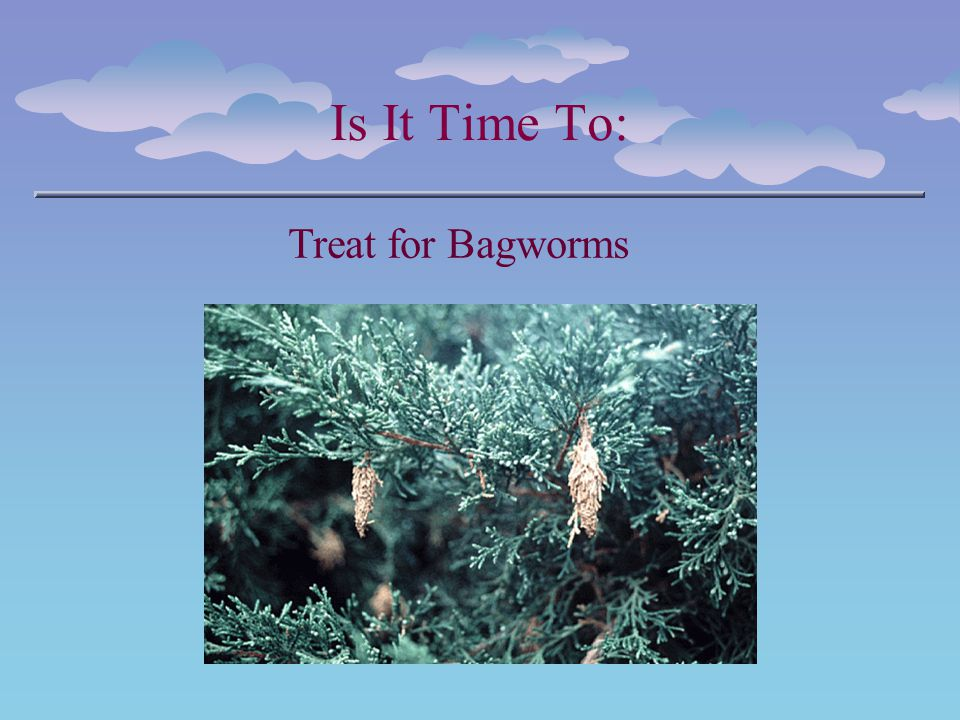 Is It Time To: Treat for Bagworms