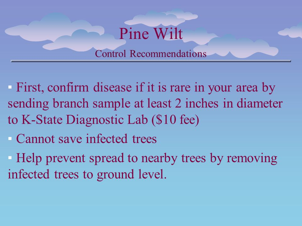 Pine Wilt Control Recommendations First, confirm disease if it is rare in your area by sending branch sample at least 2 inches in diameter to K-State