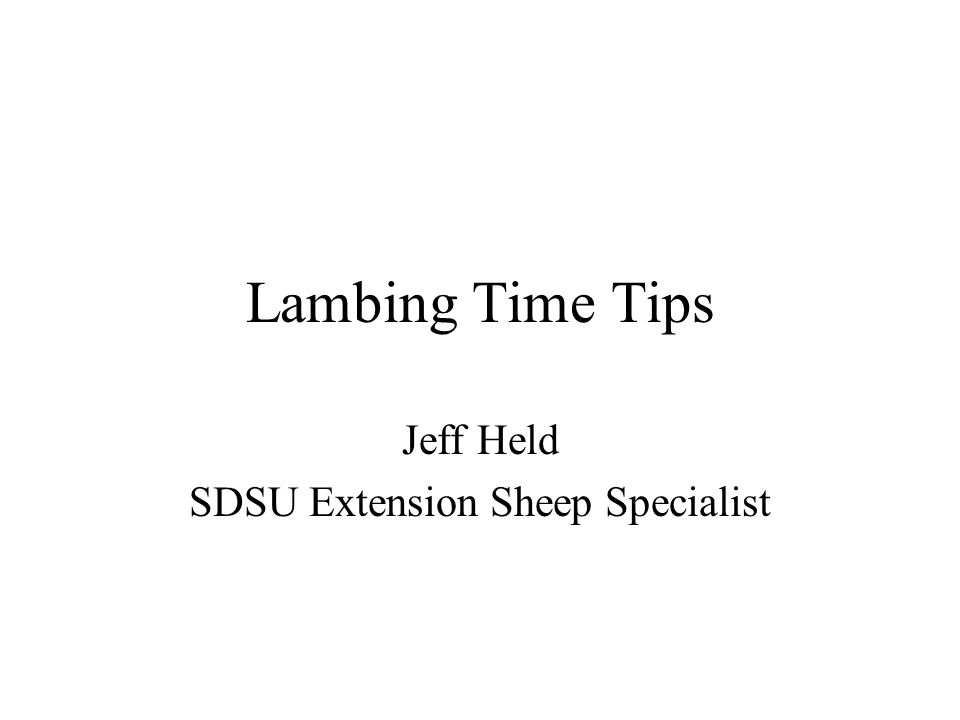 Lambing Time Tips Jeff Held SDSU Extension Sheep Specialist
