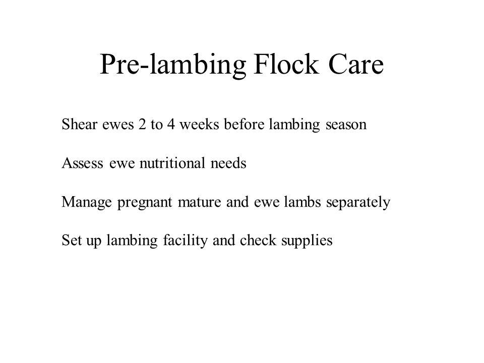 Pre-lambing Flock Care Shear ewes 2 to 4 weeks before lambing season Assess ewe nutritional needs Manage pregnant mature and ewe lambs separately Set