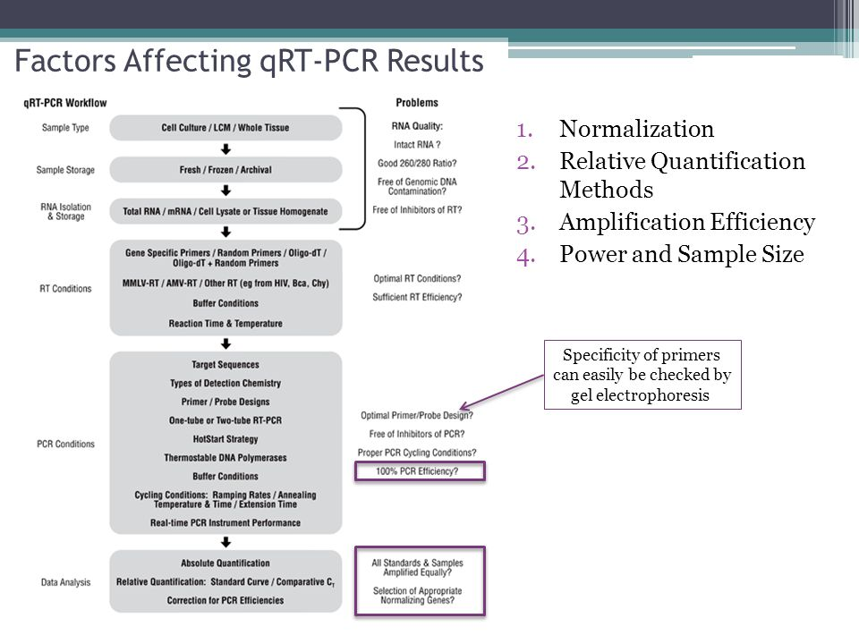Factors Affecting qRT-PCR Results 1.Normalization 2.Relative Quantification Methods 3.Amplification Efficiency 4.Power and Sample Size Specificity of