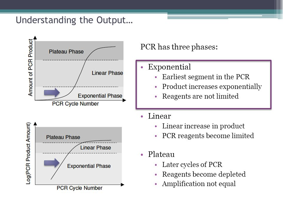 Understanding the Output… PCR has three phases: Exponential Earliest segment in the PCR Product increases exponentially Reagents are not limited Linea