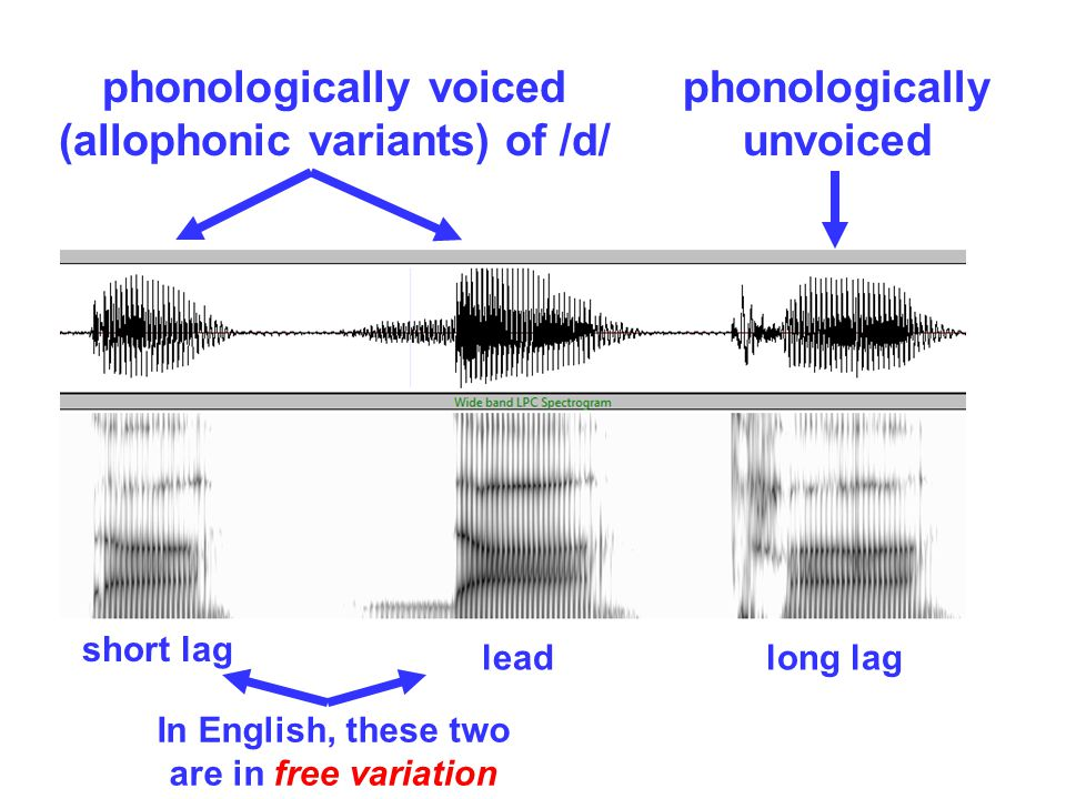 phonologically voiced (allophonic variants) of /d/ short lag leadlong lag release & voicing ~simultaneous voicing precedes release longish delay betw.