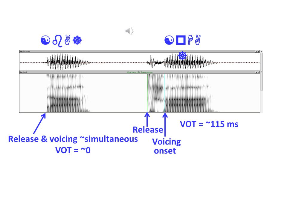 Release & voicing ~simultaneous VOT = ~0 Release Voicing onset VOT = ~115 ms [pHA ] [bA]