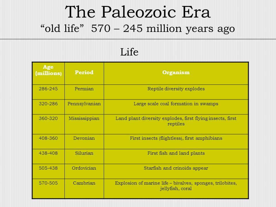 The Paleozoic Era old life 570 – 245 million years ago Age (millions ) PeriodOrganism 286-245PermianReptile diversity explodes 320-286PennsylvanianLarge scale coal formation in swamps 360-320MississippianLand plant diversity explodes, first flying insects, first reptiles 408-360DevonianFirst insects (flightless), first amphibians 438-408SilurianFirst fish and land plants 505-438OrdovicianStarfish and crinoids appear 570-505CambrianExplosion of marine life – bivalves, sponges, trilobites, jellyfish, coral Life