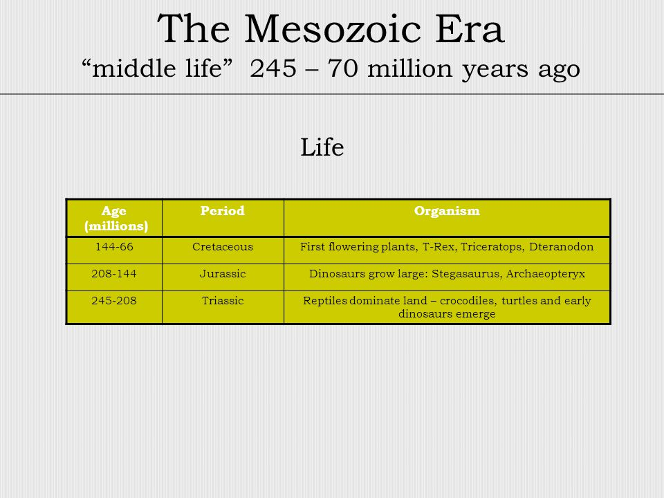 The Mesozoic Era middle life 245 – 70 million years ago Age (millions) PeriodOrganism 144-66CretaceousFirst flowering plants, T-Rex, Triceratops, Dteranodon 208-144JurassicDinosaurs grow large: Stegasaurus, Archaeopteryx 245-208TriassicReptiles dominate land – crocodiles, turtles and early dinosaurs emerge Life